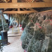 Start kerstboom verkoop!!